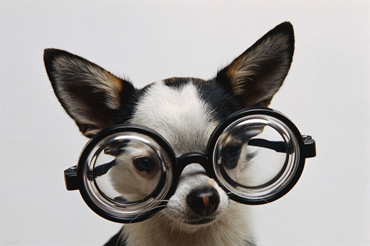 dog-glasses-1024x682