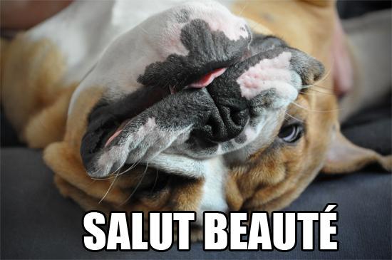 salut beauté